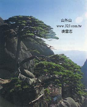 黄山风景写实钢笔画